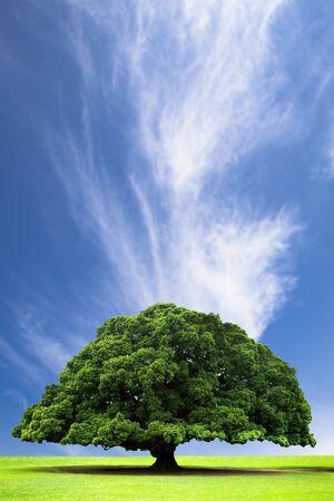 Frühjahr- und Sommermonaten Landschaft mit alten Baum auf die Hügel und Wolke Standard-Bild