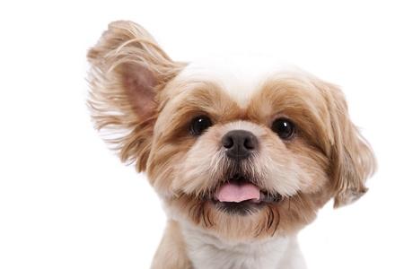 animal tongue: