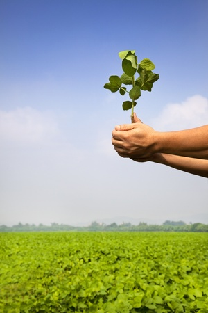 hand of farmer holding sapling on the farm Stock Photo - 10960156