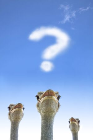 question and thinking  concept. ostrich watching question mark photo