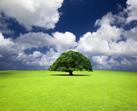 cloudscape: single old tree on the grass field Stock Photo