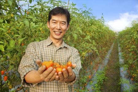 joven agricultor: los agricultores de tomate holding asi�tico en su finca Foto de archivo