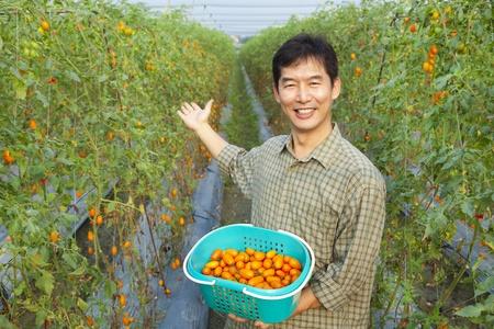 successful asian farmer holding tomato on his farm photo