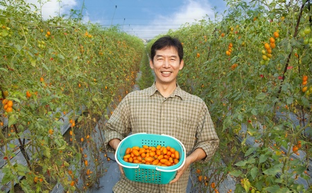 asian produce: middle aged happy  asian farmer holding tomato on his farm
