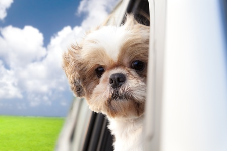 car front view: dog enjoying a ride in the car