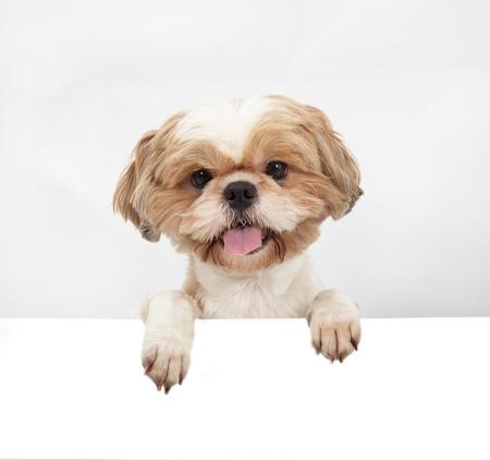 perros graciosos: Perro adorable con la tarjeta en blanco