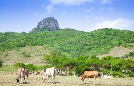 dajianshan mountain ranch. kenting national park in taiwan photo