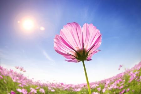sunshine: margaritas hermosas de la luz del sol de fondo Foto de archivo