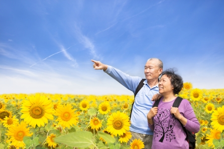 elderly couples: happy senior couple standing in the sunflower garden