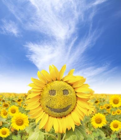 la cara sonriente de girasol en verano Foto de archivo