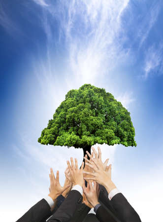 hands of business people holding green old tree. business with eco concept photo