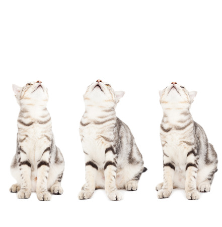 all cats looking up Stock Photo - 23074205
