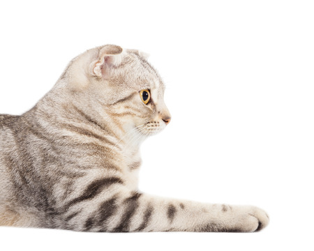 brown pussy: side view of smiling cat