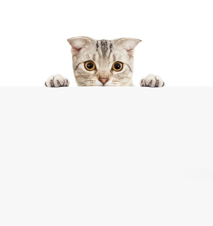 Pretty cat with empty board photo