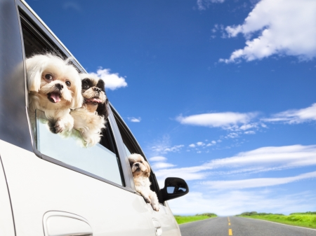 domestic car: dog family traveling  road trip
