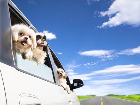 hombre conduciendo: familia de los perros viajar viaje por carretera