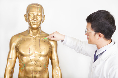 medicina tradicional china: doctor de medicina china enseña punto de acupuntura en el modelo humano