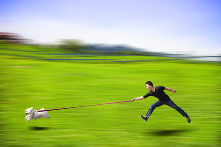 disobedient: disobedient dog running fast and dragging a man by the leash Stock Photo