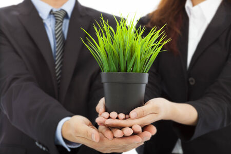 hands of business people holding green sapling . business with eco concept photo
