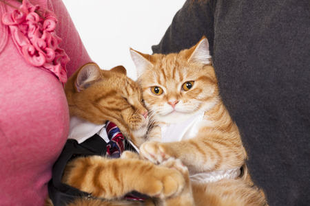 two cats in love with owners photo