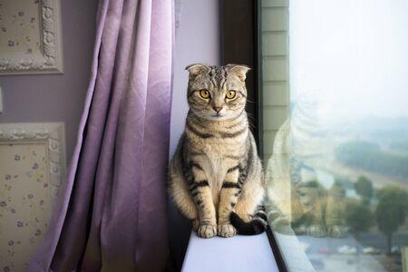 beautiful cat sitting on a window photo