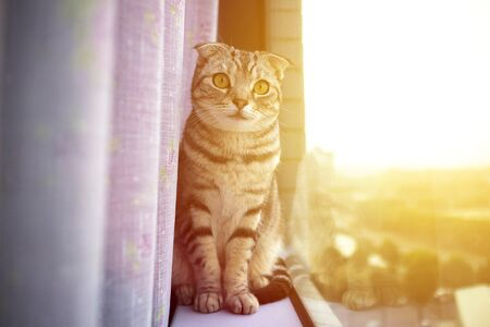 house cat: beautiful cat sitting on a window with sunlight background