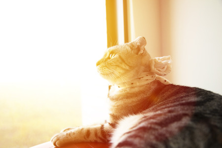 beautiful cat sitting on the window watch sunlight