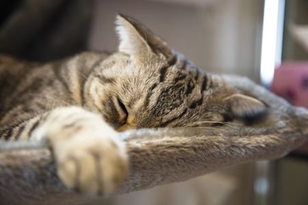 house cat: cat sleeping on the platform in the house Stock Photo