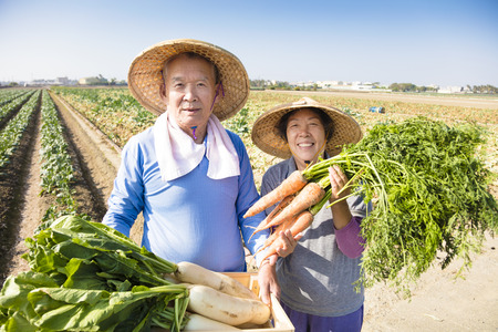harvest: happy senior couple farmer with a lot of carrots in hand