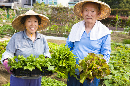happy Senior couple working in vegetables garden
