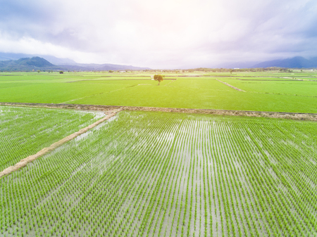 aerial view of rice field at spring Stock Photo