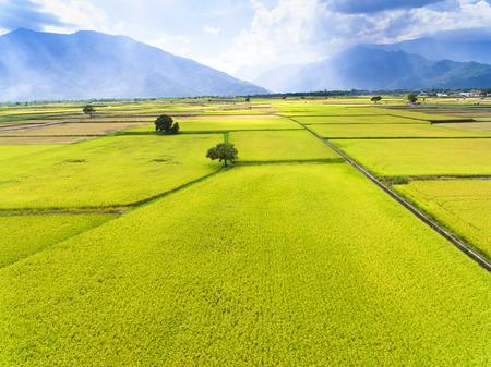 luchtfoto van rijst veld. Taiwan.