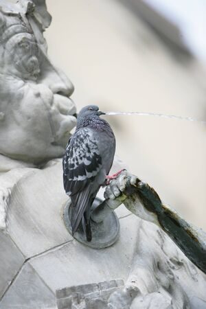 Pigeon perched on a water fountain photographed so that the water spouting from the mouth of the cherub appears to be coming from the birds beak Stock Photo - 20340167