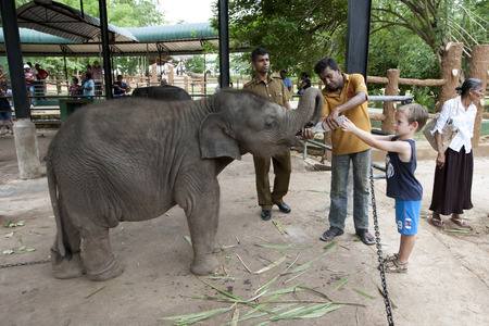orphanage: A boy helps to feed one of the elephant calves at Pinnewala Elephant Orphanage in Sri Lanka.