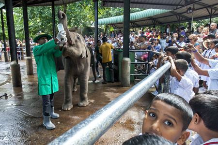 orphanage: A crowd of people watch as an elephant calf is bottle fed at the Pinnewala Elephant Orphanage in Sri Lanka.