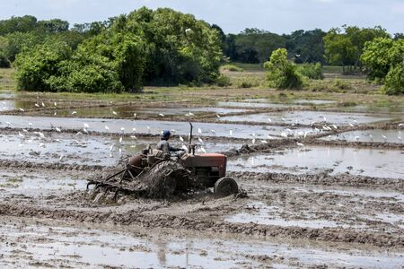 anuradhapura: A man on a tractor ploughing rice fields north of Anuradhapura in Sri Lanka. Editorial