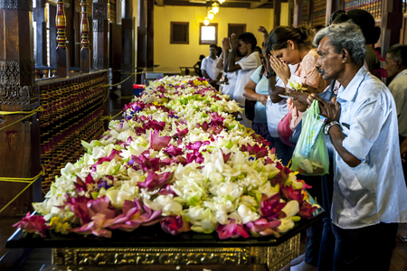 kandy: Worshippers pray infront of a bed of lotus flowers in the Temple of the Sacred Tooth Relic, Kandy, Sri Lanka. Editorial