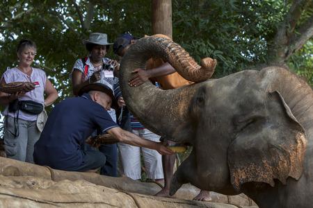 orphanage: A tourist to Pinnewala Elephant Orphanage in Sri Lanka hand feeds fruit to one of the elephants.