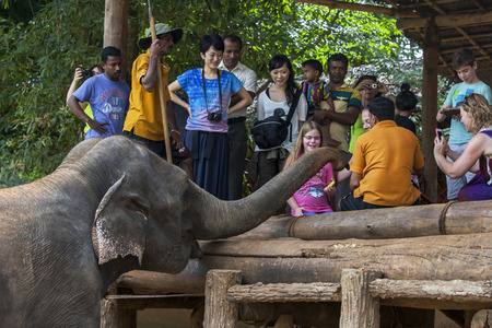 orphaned: An elephant waits patiently to be fed by a young girl at the Pinnewala Elephant Orphanage in central Sri Lanka. The orphanage was established in 1975 to care for abandoned and orphaned elephants.