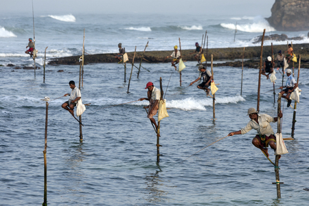 traditinal: Pole fishermen at work in the early morning at Koggala on the south coast of Sri Lanka.