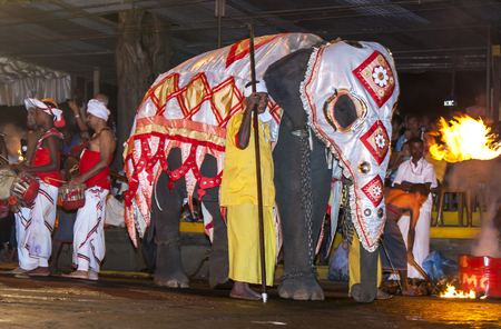 lord buddha: A ceremonial elephant parades down a street in Kandy during the Esala Perahara in Sri Lanka. The Esala Perahera is held to honour the Sacred Tooth Relic of Lord Buddha which is enshrined within the Temple of the Sacred Tooth Relic and is considered one of Editorial