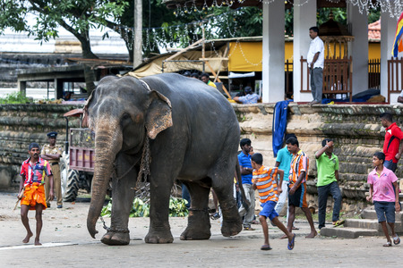 ceremonial: A ceremonial elephant, accompanied by its  mahout, moves through the Temple of the Sacred Tooth Relic comlex in Kandy, Sri Lanka during the Esala Perahera Festival. The Esala Perahera runs every year in late July or early August for ten days, ending on th Editorial