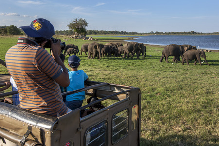 A tourist taking photos of a herd of elephants grazing next to the tank man-made reservoir at Minneriya National Park in the late afternoon. Minneriya National Park is located in central Sri Lanka, not far from the town of Habarana and is home to around 2