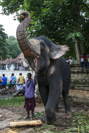 relic: A ceremonial elephant poses for tourists at the Temple of the Sacred Tooth Relic comlex in Kandy, Sri Lanka during the Esala Perahera Festival.