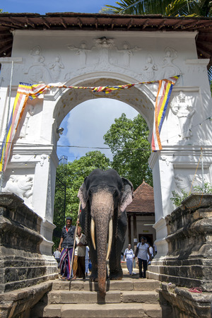 sri lanka temple: A ceremonial elephant moves through an archway within the Temple of the Sacred Tooth Relic in Kandy in Sri Lanka. The Esala Perahera is held to honour the Sacred Tooth Relic of Lord Buddha which is enshrined within the Temple of the Sacred Tooth Relic and Editorial