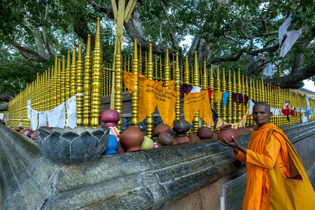 worshipper: A worshipper places a clay pot next to the Sacred Bodhi Tree at Kataragama Temple in Sri Lanka. Editorial
