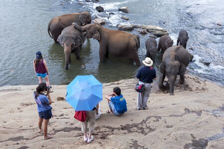 orphanage: Elephants from the Pinnawela Elephant Orphanage relax on the bank of the Maha Oya River in Sri Lanka. Twice daily the elephants from the orphanage walk through the streets of Pinnewala to the river to bathe, much to the delight of tourists. Editorial