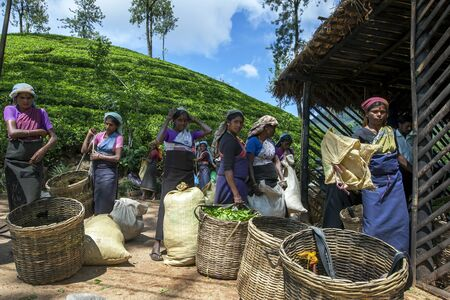 adams: Tea pickers line up to have their baskets full of tea leaves weighted at the Estate near Adams Peak in Sri Lanka.