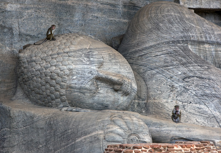 vihara: Toque Macaque monkeys sit on the Gal Vihara at the ancient site of Polonnaruwa which includes a reclining Buddha statue, two seated Buddha statues and a standing Buddha statue all carved out of a single slab of granite rock. Polonnaruwa, Sri Lanka