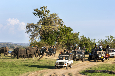 converge: Safari jeeps converge on a herd of elephants in the late afternoon next to a tank within Minneriya National Park, Sri Lanka.